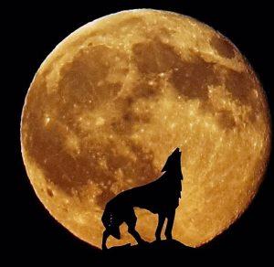 howling-moon